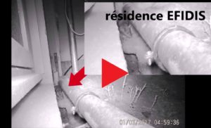 Rats et Punaises de lits dans des immeubles EFIDIS